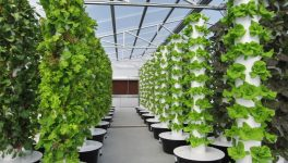 Urban Farming is in Full Bloom Thanks to One Couple