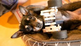 Dialexa's Tiny Wheelchair Gives Dog New Lease on Life