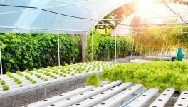 Flux's Artificial Intelligence Puts Farming in the Cloud