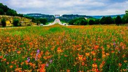 BRIT, Tarleton State Unite to Map Rare Plants Along State Highways