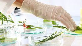 UTA, BRIT Joining Forces to Further Plant Research