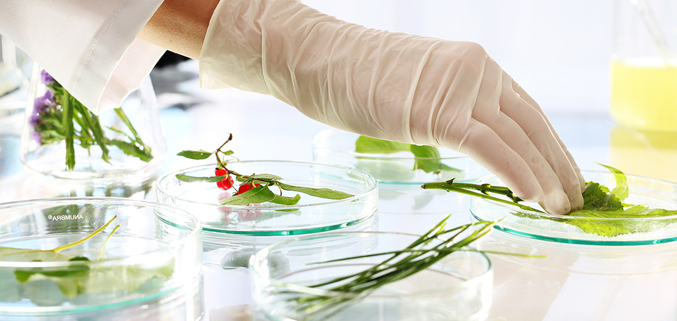 Biotechnologist examine the plant samples in the laboratory