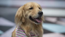 Fort Worth Hospital Pooch Named a 'Dog Who Changed the World'
