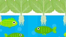 Competition Aims to Attract College Aquaponics Teams