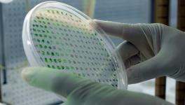 ExxonMobil's Algae Breakthrough Boosts Biofuel Future