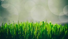 On-Demand Lawn Services FindMarketinNorthTexas